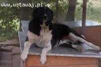 Pigwa, duża kochana sunia kochająca całym sercem!