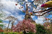Język francuski dla Ciebie - lekcje, tłumaczenia, Skype