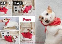 Pepe, król kanapy, młody szkrab szuka domu!