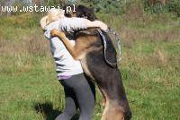 Masio - 50 kg wagi i wielkie serce szuka domu!