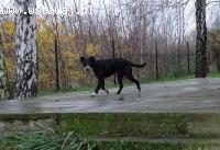 Rafi bardzo spokojny psiak w typie teriera szuka super domu!