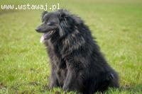 Cudowna kudłata Halinka, uległa, spokojna sunia!