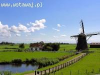 HOLANDIA - praca na produkcji BEZ WIEKÓWKI i JĘZYKA