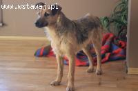 Pola - 10 miesięczna mała suczka do adopcji