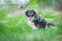 Agat, młody, wesoły psiak szuka kochającego domu!