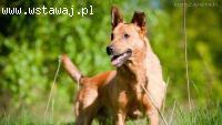 Zrównoważony Dino, idealny kandydat na psa rodzinnego!