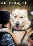 Bohun super pies czeka na super własciciela!
