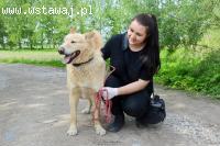 Duży, niezwykły Marcel - wspaniały pies szuka domu z ogrodem