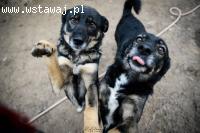 Megi i Pegi cudowne psie bliźniaczki, niekonfliktowe, drobne