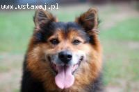 Misiek i Lena, wyjątkowa psia para szuka domu!
