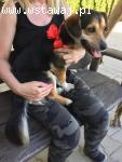 Młody - wesoły psiak do adopcji!