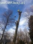 Wycinka, pielęgnacja drzew