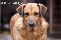 Krasnalka - od szczeniaka w schronie - 12 lat...
