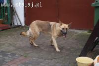 Saba aktywny pies dla aktywnego człowieka