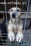BELA - od szczeniaka w schronisku - adopcja