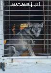 Pączek - pies skazany na dożywacie - czekamy na cud