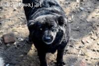 Halinka, cudowna kudłata sunia, materiał na przyjaciółkę na