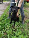 Orion, inteligentny, wesoły psiak szuka kochającego domu!
