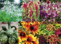 Nasiona Roślin Jadalnych i Ozdobnych