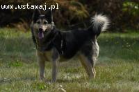 Wikuś, grzeczny psiak kochajacy całym sercem, adoptuj go!