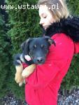 Bajka, psi dzieciak, niewielka, wesoła sunia do pokochania!