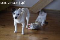 Jula, nakolankowa młodziutka sunia szuka wspaniałego domu!